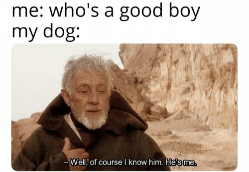 Dank, Good, and Boy: me: who's a good boy  my dog:  of course I know him. He  's me  Well,