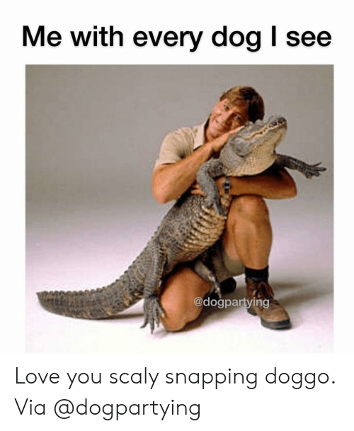 Love, Memes, and 🤖: Me with every dog I see  @dogpartying Love you scaly snapping doggo. Via @dogpartying