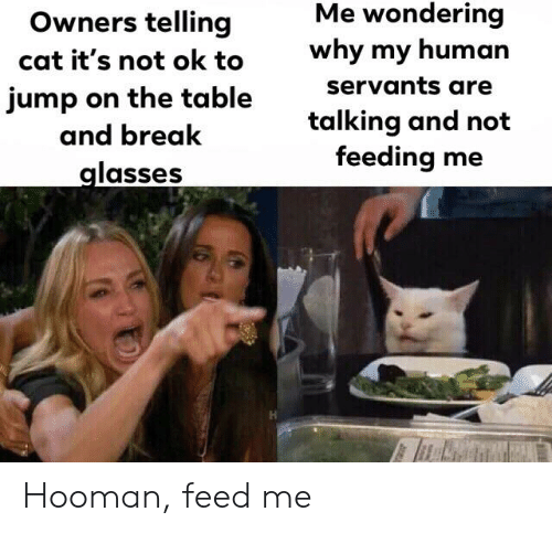 Reddit, Break, and Glasses: Me wondering  Owners telling  why my human  cat it's not ok to  servants are  jump on the table  and break  talking and not  feeding me  glasses Hooman, feed me