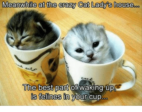 crazy cats: Meanwhile at the crazy Cat Lady's house  The best part of waking upp  is felines in your cup.
