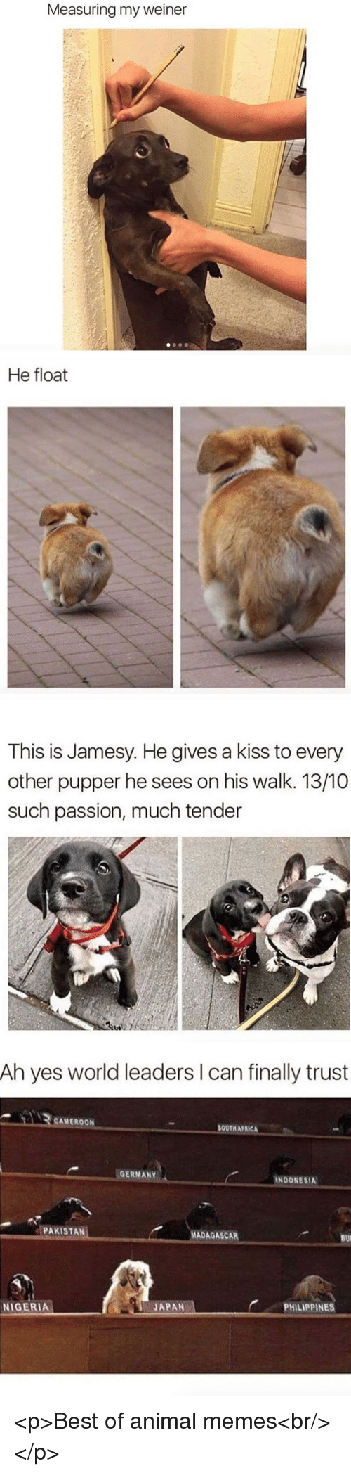 Indonesia: Measuring my weiner   He float   This is Jamesy. He gives a kiss to every  other pupper he sees on his walk. 13/10  such passion, much tender   Ah yes world leaders I can finally trust  CAMEROON  SOUTH AFRICA  GERMANY  INDONESIA  PAKISTAN  MADAGASCAR  BUI  PHILIPPINES  JAPAN-  NIGERIA <p>Best of animal memes<br/></p>