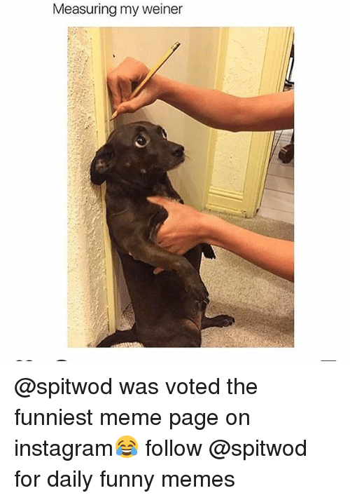 Funny, Instagram, and Meme: Measuring my weiner @spitwod was voted the funniest meme page on instagram😂 follow @spitwod for daily funny memes