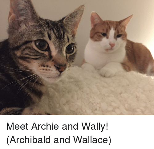 Archie, And, and Wally
