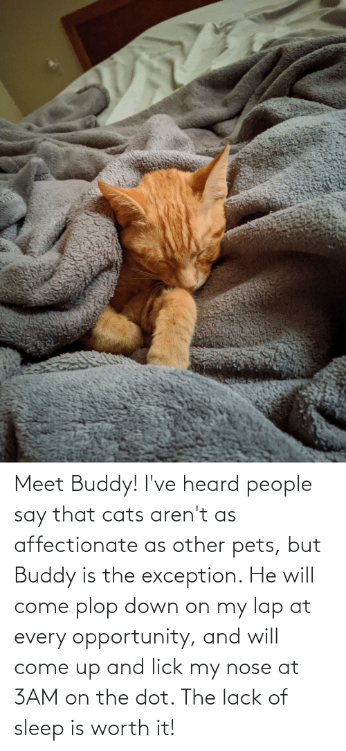 Aww Memes: Meet Buddy! I've heard people say that cats aren't as affectionate as other pets, but Buddy is the exception. He will come plop down on my lap at every opportunity, and will come up and lick my nose at 3AM on the dot. The lack of sleep is worth it!
