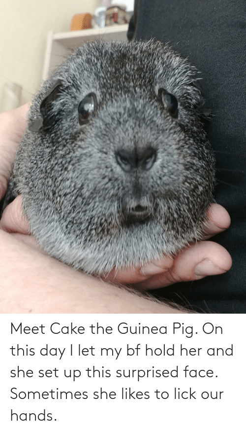 Cake, Guinea Pig, and Her: Meet Cake the Guinea Pig. On this day I let my bf hold her and she set up this surprised face. Sometimes she likes to lick our hands.