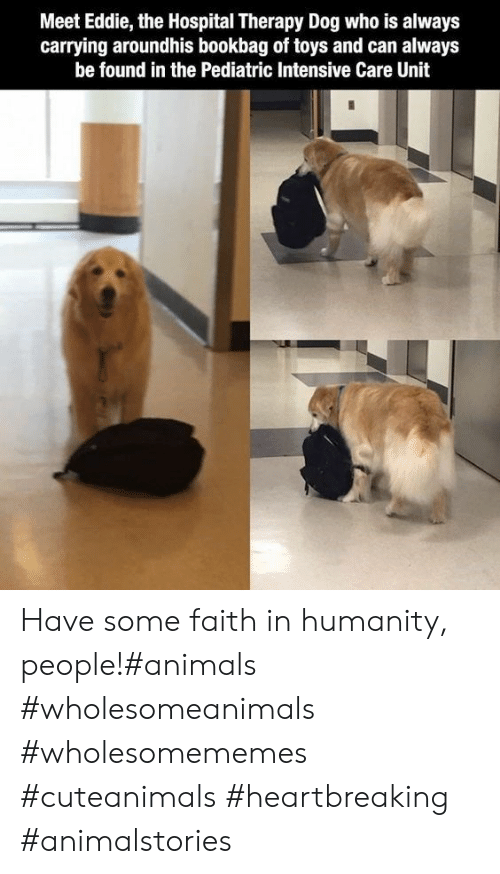 Faith In Humanity: Meet Eddie, the Hospital Therapy Dog who is always  carrying aroundhis bookbag of toys and can always  be found in the Pediatric Intensive Care Unit Have some faith in humanity, people!#animals #wholesomeanimals #wholesomememes #cuteanimals #heartbreaking #animalstories