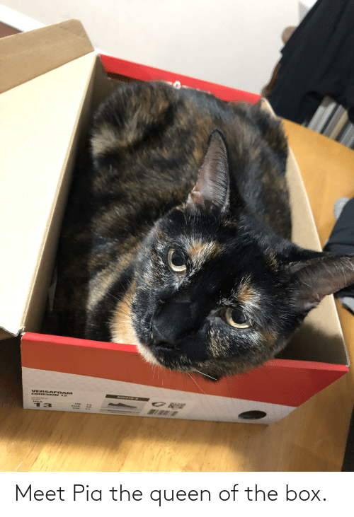 pia: Meet Pia the queen of the box.
