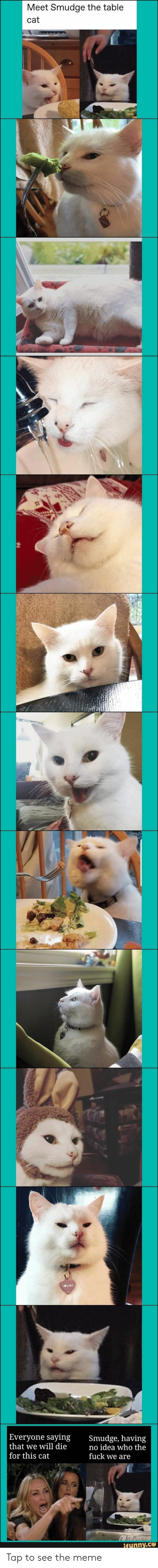 Meme, Fuck, and Idea: Meet Smudge the table  cat  |Everyone saying  that we will die  for this cat  Smudge, having  no idea who the  fuck we are  taLA  ifunny.co Tap to see the meme