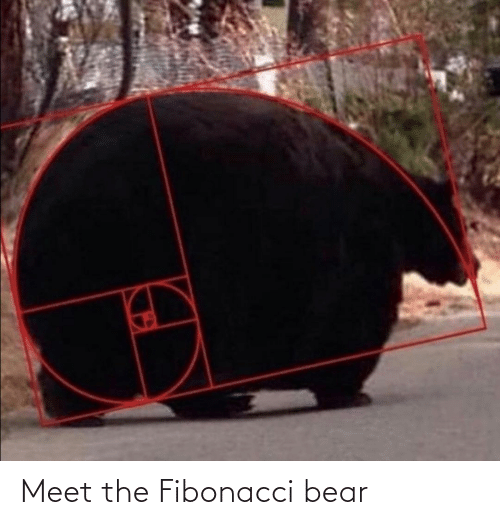 Bear: Meet the Fibonacci bear