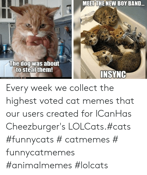 Cat Memes: MEET THE NEW BOY BAND..  The dogwas about  to steal them  INSYNG Every week we collect the highest voted cat memes that our users created for ICanHas Cheezburger's LOLCats.#cats #funnycats # catmemes # funnycatmemes #animalmemes #lolcats