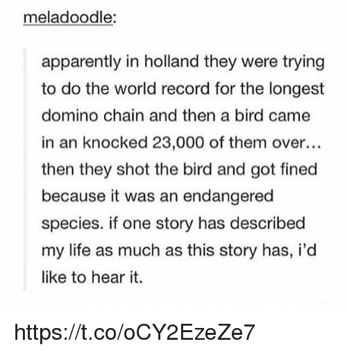 Apparently, Life, and Memes: meladoodle:  apparently in holland they were trying  to do the world record for the longest  domino chain and then a bird came  in an knocked 23,000 of them over...  then they shot the bird and got fined  because it was an endangered  species. if one story has described  my life as much as this story has, i'd  like to hear it. https://t.co/oCY2EzeZe7