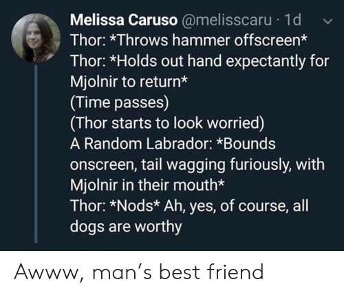 labrador: Melissa Caruso @melisscaru 1d  Thor: *Throws hammer offscreen*  Thor: *Holds out hand expectantly for  Mjolnir to return*  (Time passes)  (Thor starts to look worried)  A Random Labrador: *Bounds  onscreen, tail wagging furiously, with  Mjolnir in their mouth*  Thor: *Nods* Ah, yes, of course, all  dogs are worthy Awww, man's best friend