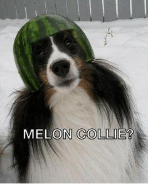 Dank, 🤖, and Melon: MELON COLLIE?