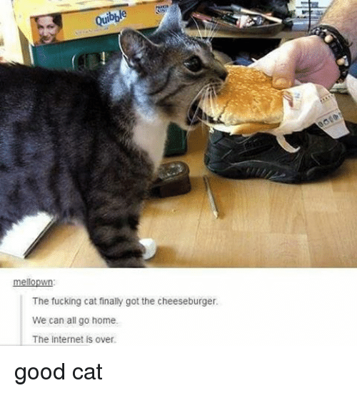 Cats, Memes, and 🤖: meloown  The fucking cat finally got the cheeseburger.  We can all go home.  The internet is over. good cat