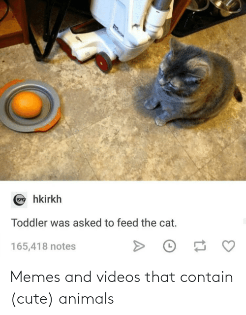 videos: Memes and videos that contain (cute) animals