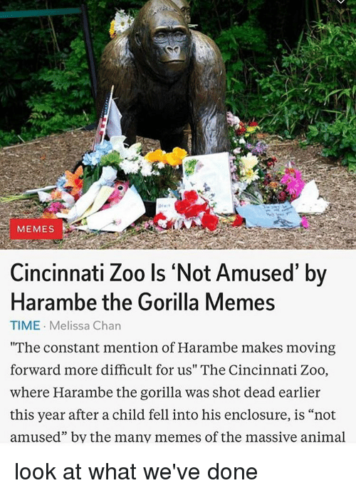 "Gorilla Memes: MEMES  Cincinnati Zoo Is Not Amused' by  Harambe the Gorilla Memes  TIME. Melissa Chan  ""The constant mention of Harambe makes moving  forward more difficult for us"" The Cincinnati Zoo,  where Harambe the gorilla was shot dead earlier  this year after a child fell into his enclosure, is ""not  amused"" by the many memes of the massive animal look at what we've done"