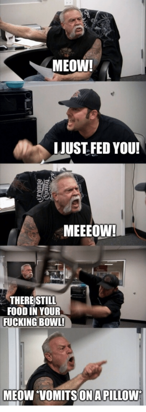 Food, Fucking, and Bowl: MEOW!  LJUST FED YOU!  MEEEOW!  THERE STILL  FOOD IN YOUR  FUCKING BOWL!  MEOW VOMITSONA PILLOW