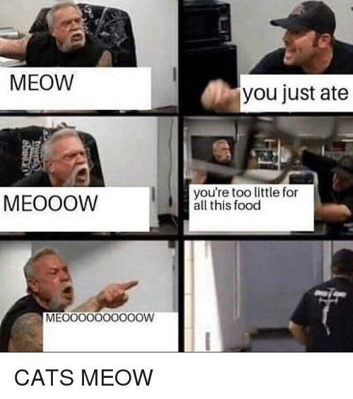 Cats, Food, and Memes: MEOW  you just ate  MEOOOW  you're too little for  all this food  MEOOOooo0oOOW CATS MEOW