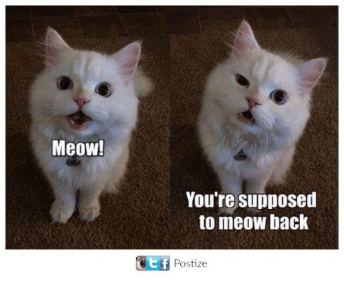 Meowe: Meow!  You're supposed  to meow back  E f  Postize