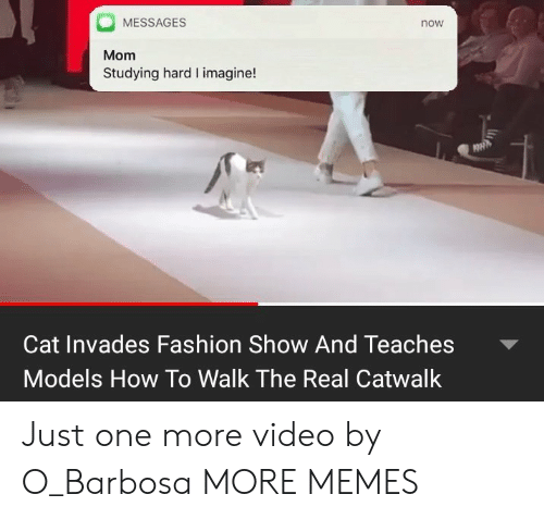 Dank, Fashion, and Memes: MESSAGES  now  Mom  Studying hard I imagine!  Cat Invades Fashion Show And Teaches  Models How To Walk The Real Catwalk Just one more video by O_Barbosa MORE MEMES