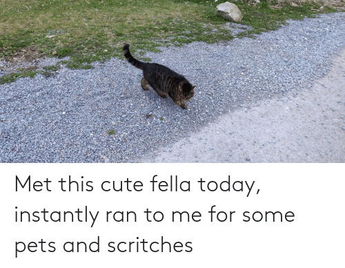 Instantly: Met this cute fella today, instantly ran to me for some pets and scritches