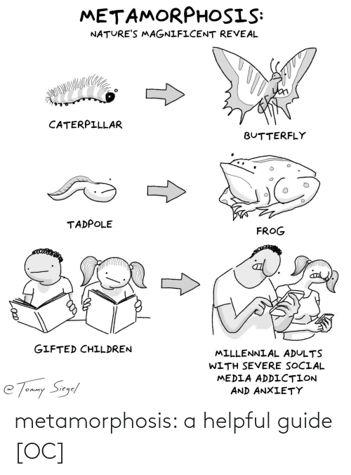 helpful: metamorphosis: a helpful guide [OC]
