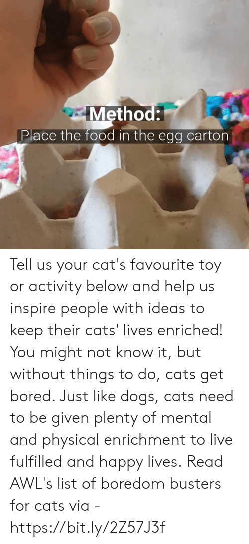 Bored, Cats, and Dogs: Method:  Place the food in the egg carton Tell us your cat's favourite toy or activity below and help us inspire people with ideas to keep their cats' lives enriched!  You might not know it, but without things to do, cats get bored. Just like dogs, cats need to be given plenty of mental and physical enrichment to live fulfilled and happy lives.  Read AWL's list of boredom busters for cats via - https://bit.ly/2Z57J3f