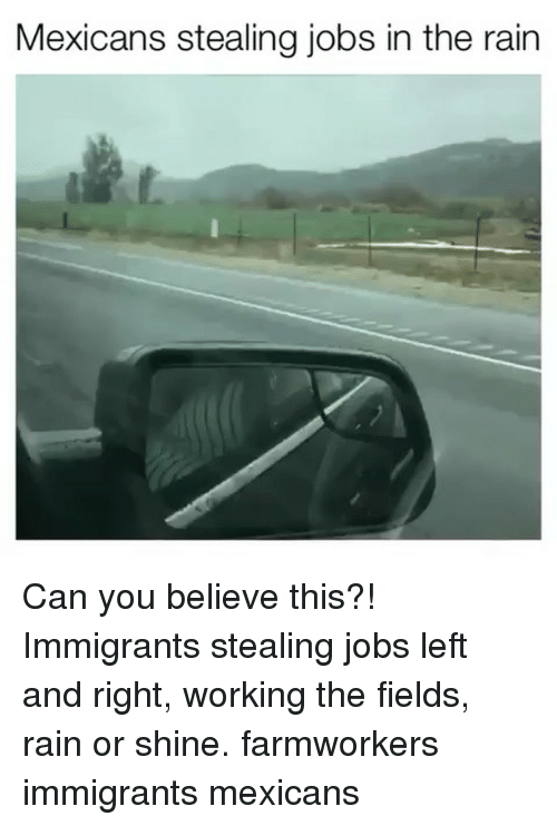 Memes, Jobs, and Rain: Mexicans stealing jobs in the rain Can you believe this?! Immigrants stealing jobs left and right, working the fields, rain or shine. farmworkers  immigrants mexicans