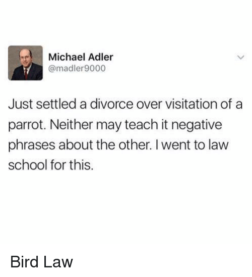 Memes, School, and Michael: Michael Adler  @madler9000  Just settled a divorce over visitation of a  parrot. Neither may teach it negative  phrases about the other. I went to law  school for this. Bird Law