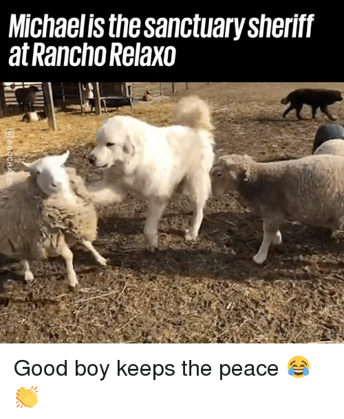 Dank, Good, and Peace: Michaelis the sanctuary sheriff  at Rancho Relaxo Good boy keeps the peace 😂👏