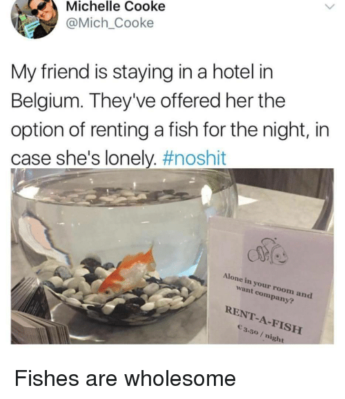 renting: Michelle Cooke  @Mich_Cooke  My friend is staying in a hotel in  Belgium. They've offered her the  option of renting a fish for the night, in  case she's lonely. #noshit  Alone in your room and  want company?  RENT-A-FISH  3.50/ night Fishes are wholesome