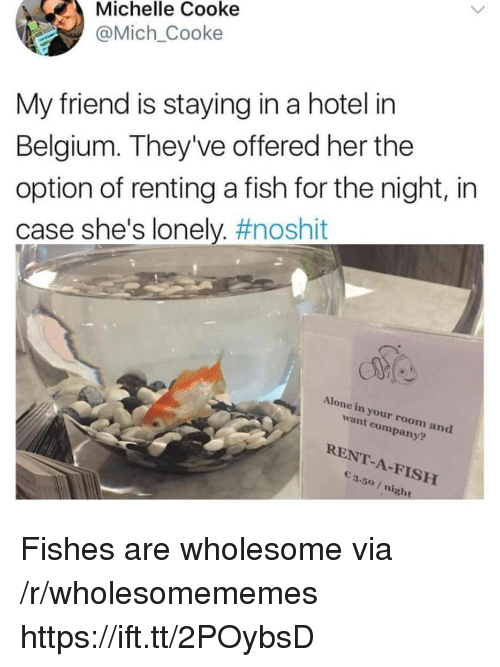 renting: Michelle Cooke  @Mich_Cooke  My friend is staying in a hotel in  Belgium. They've offered her the  option of renting a fish for the night, in  case she's lonely. #noshit  Alone in your room and  want company?  RENT-A-FISH  3.50/ night Fishes are wholesome via /r/wholesomememes https://ift.tt/2POybsD