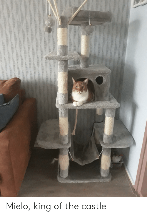 The Castle, Castle, and King: Mielo, king of the castle