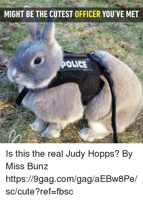 Judy Hopps: MIGHT BE THE CUTEST OFFICER YOU'VE MET  OLICE Is this the real Judy Hopps?   By Miss Bunz  https://9gag.com/gag/aEBw8Pe/sc/cute?ref=fbsc