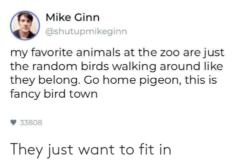 Animals, Birds, and Fancy: Mike Ginn  @shutupmikeginn  my favorite animals at the zoo are just  the random birds walking around like  they belong. Go home pigeon, this is  fancy bird town  33808 They just want to fit in