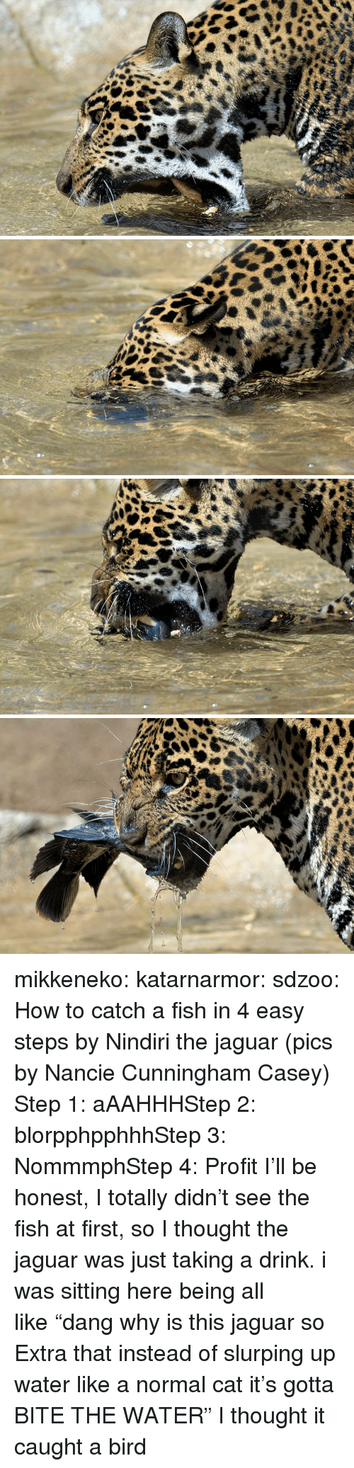 """Target, Tumblr, and Blog: mikkeneko:  katarnarmor:  sdzoo: How to catch a fish in 4 easy steps by Nindiri the jaguar (pics by Nancie Cunningham Casey)  Step 1: aAAHHHStep 2: blorpphpphhhStep 3: NommmphStep 4: Profit  I'll be honest, I totally didn't see the fish at first, so I thought the jaguar was just taking a drink. i was sitting here being all like""""dang why is this jaguar so Extra that instead of slurping up water like a normal cat it's gotta BITE THE WATER""""   I thought it caught a bird"""