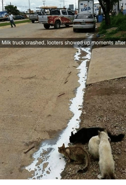 Milk, Truck, and After: Milk truck crashed, looters showed up moments after