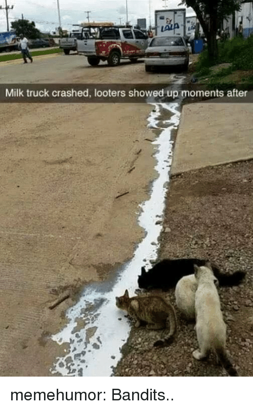 Tumblr, Blog, and Http: Milk truck crashed, looters showed up moments after memehumor:  Bandits..