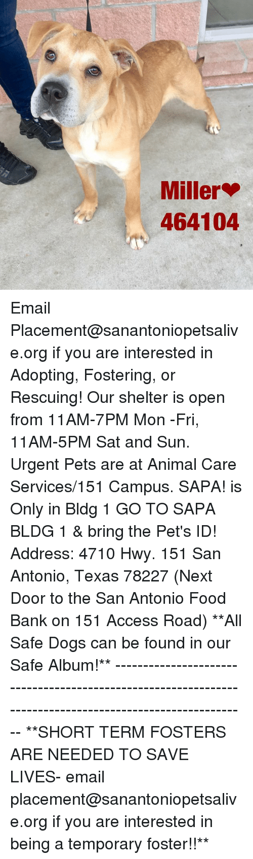 Dogs, Food, and Memes: Miller  464104 Email Placement@sanantoniopetsalive.org if you are interested in Adopting, Fostering, or Rescuing!  Our shelter is open from 11AM-7PM Mon -Fri, 11AM-5PM Sat and Sun.  Urgent Pets are at Animal Care Services/151 Campus. SAPA! is Only in Bldg 1 GO TO SAPA BLDG 1 & bring the Pet's ID! Address: 4710 Hwy. 151 San Antonio, Texas 78227 (Next Door to the San Antonio Food Bank on 151 Access Road)  **All Safe Dogs can be found in our Safe Album!** ---------------------------------------------------------------------------------------------------------- **SHORT TERM FOSTERS ARE NEEDED TO SAVE LIVES- email placement@sanantoniopetsalive.org if you are interested in being a temporary foster!!**