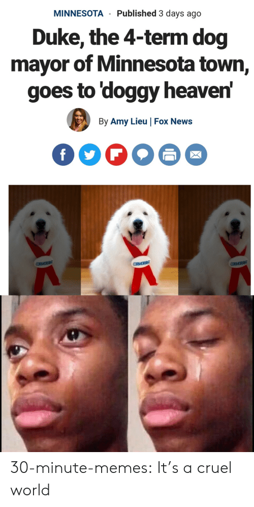 Heaven, Memes, and News: MINNESOTA Published 3 days ago  Duke, the 4-term dog  mayor of Minnesota town,  goes to 'doggy heaven  By Amy Lieu |Fox News 30-minute-memes:  It's a cruel world