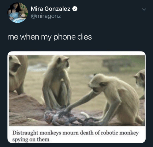 mira: Mira Gonzalez  @miragonz  me when my phone dies  Distraught monkeys mourn death of robotic monkey  spying on them