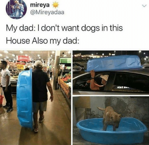 In This House: mireya  @Mireyadaa  My dad: I don't want dogs in this  House Also my dad: