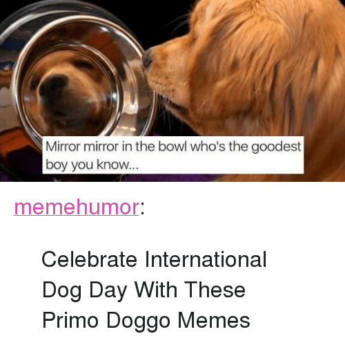 "Doggo Memes: Mirror mirror in the bowl who's the goodest  boy you know <p><a href=""http://memehumor.net/post/164649653752/celebrate-international-dog-day-with-these-primo"" class=""tumblr_blog"">memehumor</a>:</p>  <blockquote><p>Celebrate International Dog Day With These Primo Doggo Memes</p></blockquote>"