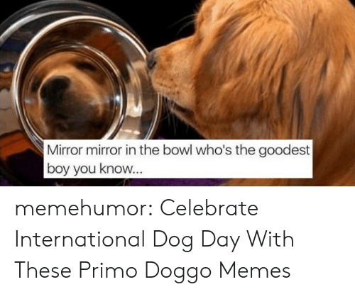 Dog Day: Mirror mirror in the bowl who's the goodest  boy you know memehumor:  Celebrate International Dog Day With These Primo Doggo Memes