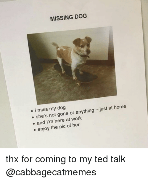 thx: MISSING DOG  . i miss my dog  e she's not gone or anything-just at home  . and I'm here at work  . enjoy the pic of her thx for coming to my ted talk @cabbagecatmemes
