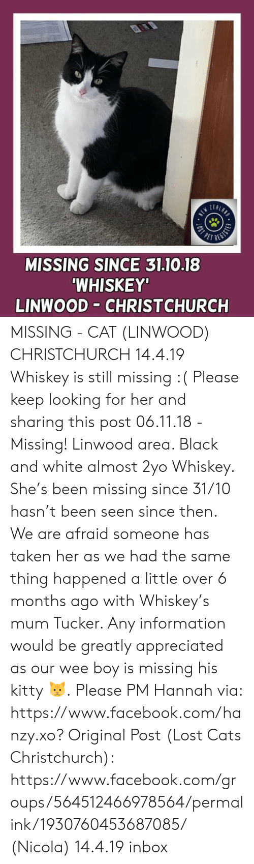 Cats, Facebook, and Memes: MISSING SINCE 31.10.18  WHISKEY'  LINWOOD CHRISTCHURCH MISSING - CAT (LINWOOD) CHRISTCHURCH  14.4.19 Whiskey is still missing :(  Please keep looking for her and sharing this post  06.11.18 - Missing! Linwood area. Black and white almost 2yo Whiskey. She's been missing since 31/10 hasn't been seen since then. We are afraid someone has taken her as we had the same thing happened a little over 6 months ago with Whiskey's mum Tucker. Any information would be greatly appreciated as our wee boy is missing his kitty 🐱.  Please PM Hannah via: https://www.facebook.com/hanzy.xo?  Original Post (Lost Cats Christchurch): https://www.facebook.com/groups/564512466978564/permalink/1930760453687085/ (Nicola)  14.4.19 inbox