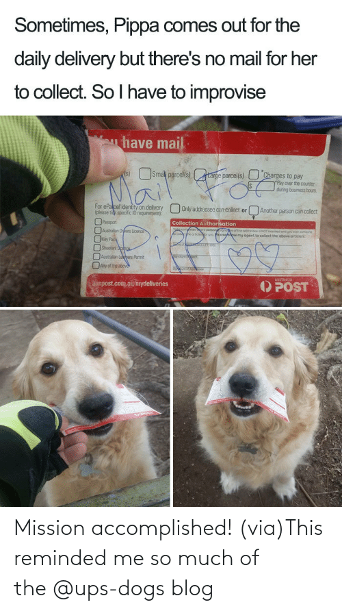 UPS: Mission accomplished! (via)This reminded me so much of the @ups-dogs blog