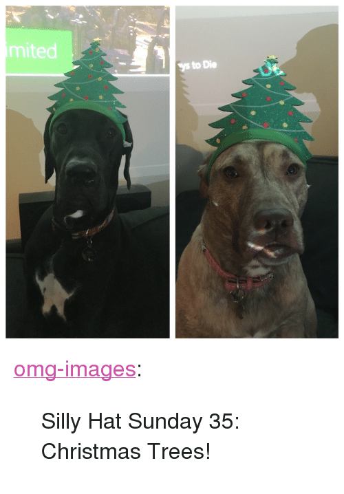 """christmas trees: mited  ys to Die <p><a href=""""http://omg-images.tumblr.com/post/156761416747/silly-hat-sunday-35-christmas-trees"""" class=""""tumblr_blog"""">omg-images</a>:</p>  <blockquote><p>Silly Hat Sunday 35: Christmas Trees!</p></blockquote>"""
