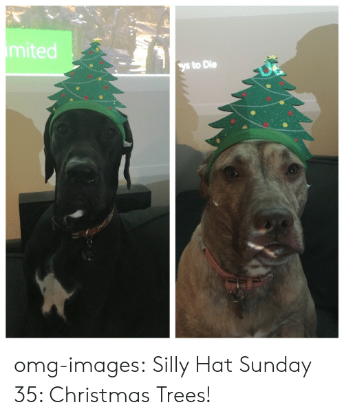 christmas trees: mited  ys to Die omg-images:  Silly Hat Sunday 35: Christmas Trees!