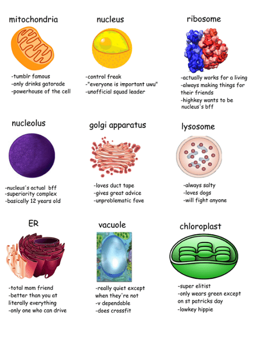 """Advice, Complex, and Dogs: mitochondria  nucleus  ribosome  tumblr famous  only drinks gatorade  powerhouse of the cell unofficial squad leader  -control freak  actually works for a living  always making things for  their friends  highkey wants to be  nucleus's bff  """"everyone is important uwu""""  nucleolus  golgi apparatus  lysosome  -nucleus's actual bff  superiority complex  basically 12 years old  loves duct tape  gives great advice  -unproblematic fave  always salty  loves dogs  will fight anyone  ER  vacuole  chloroplast  total mom friend  better than you at  literally everything  only one who can drive  really quiet except  when they're not  -v dependable  -does crossfit  super elitist  only wears green except  on st patricks day  -lowkey hippie"""